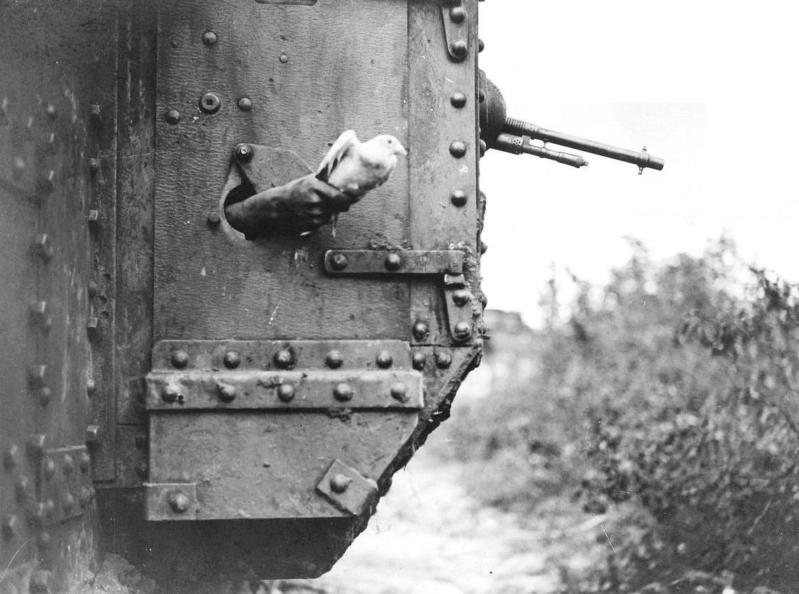 WWI Messenger Dog | Dog-handler reading a message brought ... |Wwi Messenger