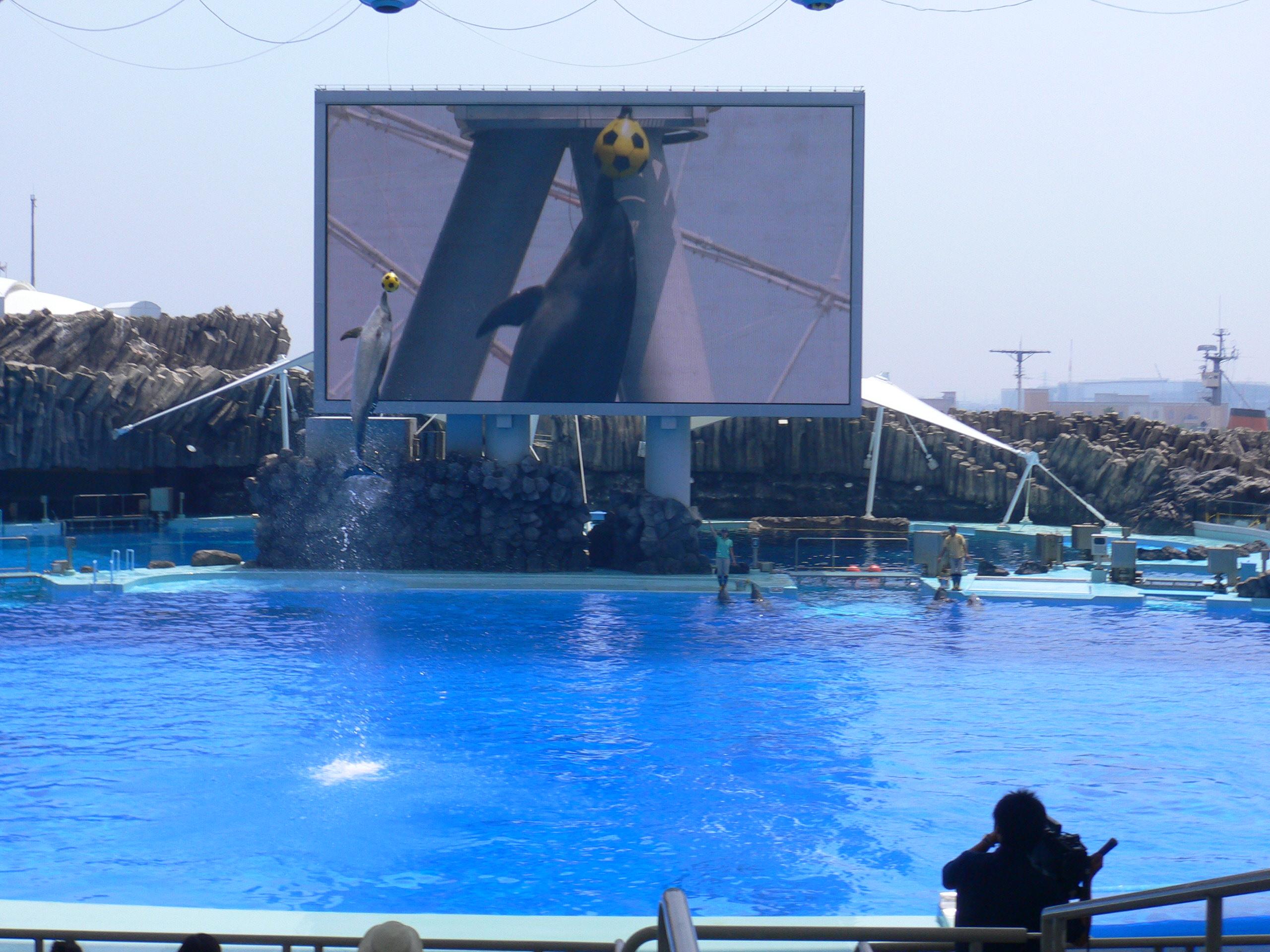 File Port Of Nagoya Public Aquarium 2005 7 21