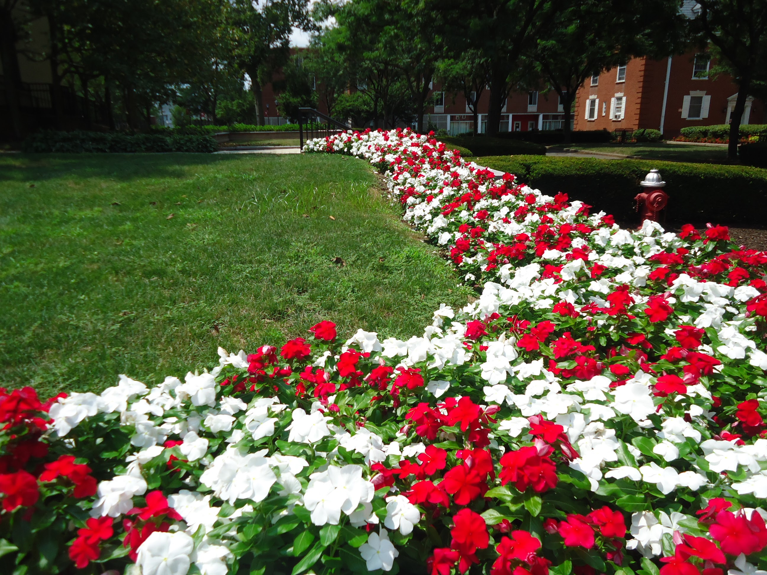 file rutgers university college avenue campus july 2016 flowers