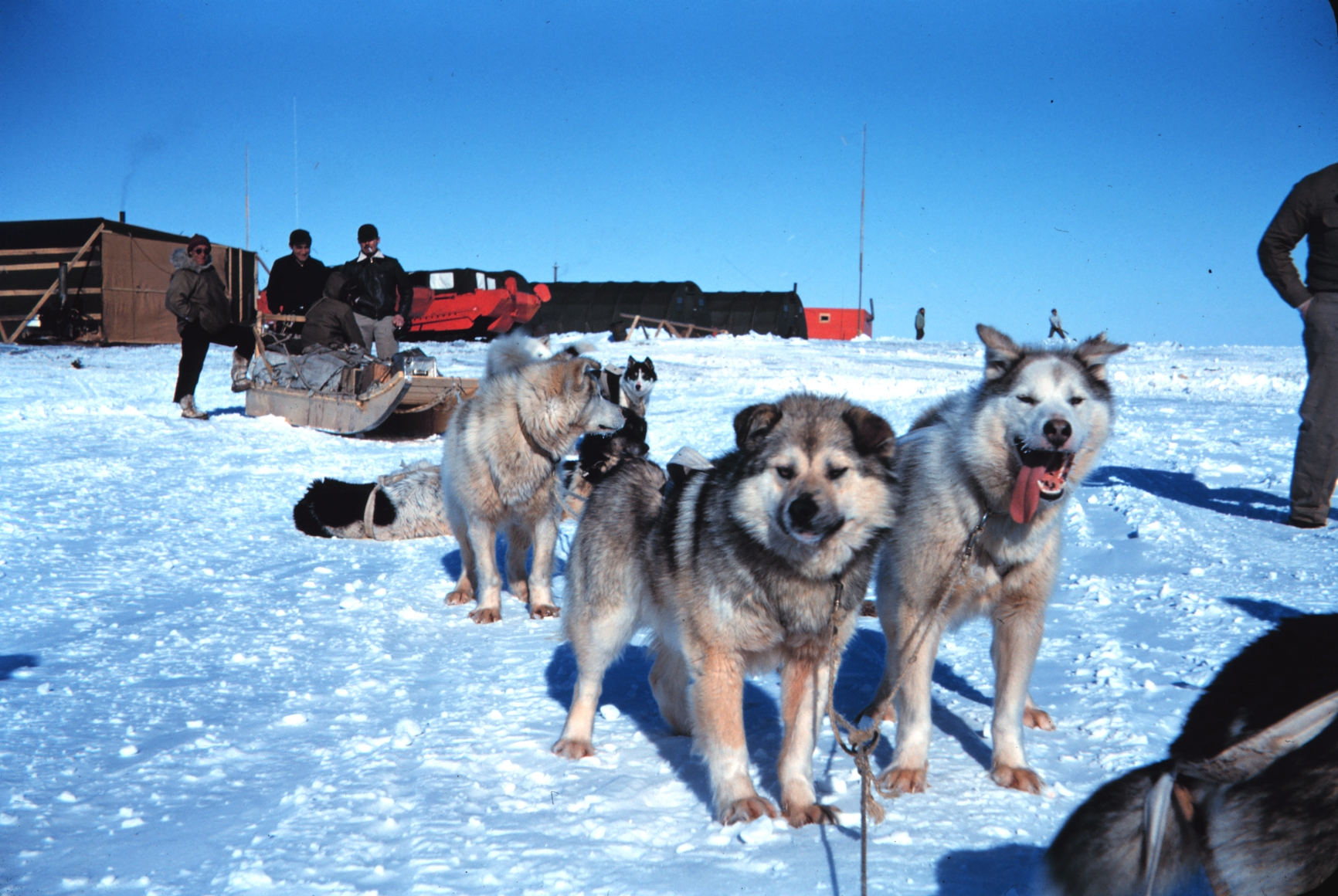 Movie Where Sled Dogs Get Left Behind