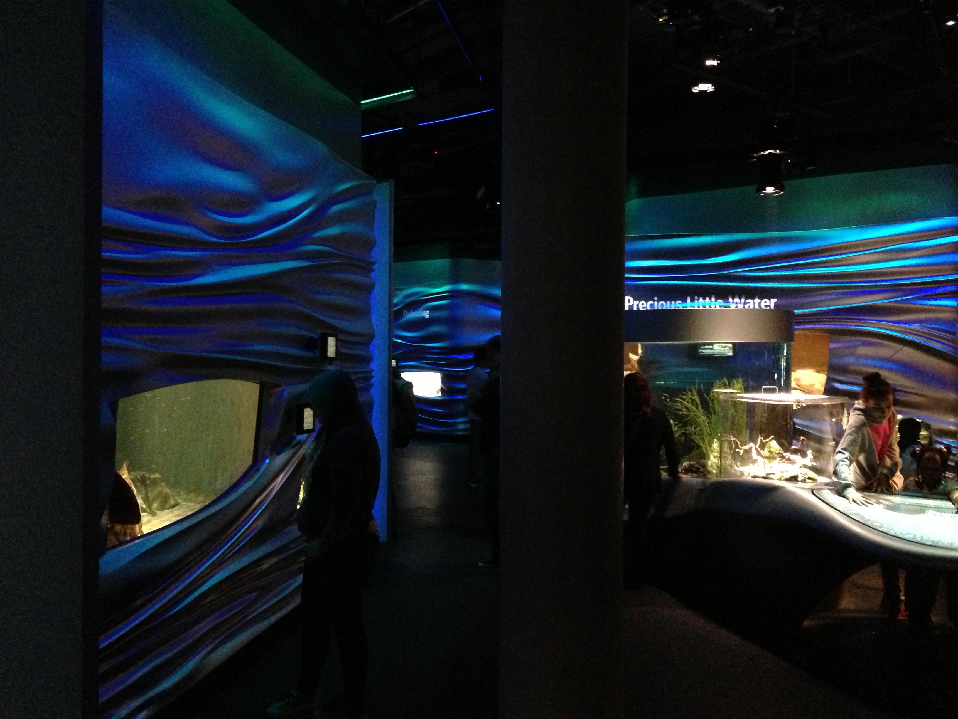 File Steinhart Aquarium 6 2013 03