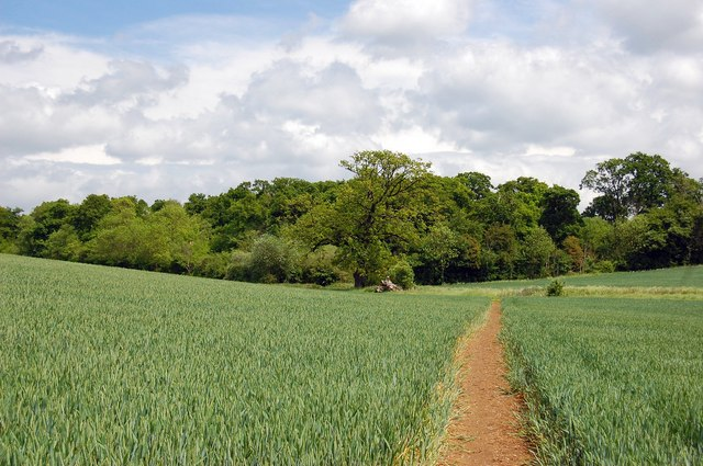 Stour Valley Path at Kentwell Downs - geograph.org.uk - 1322969