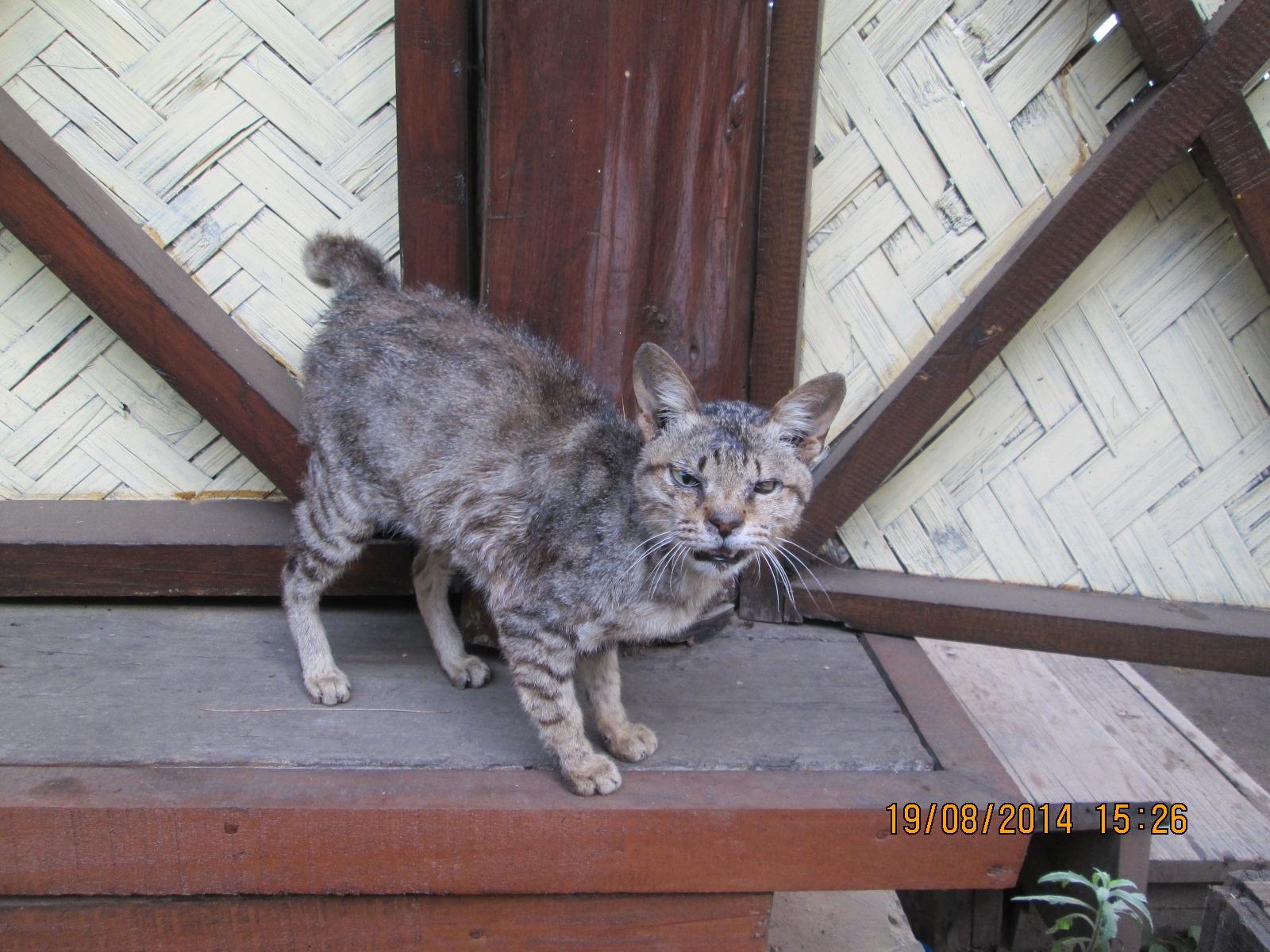 Pedigree Cat Food Can
