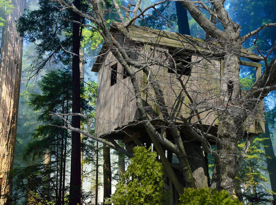 biggest treehouse in the world 2013 interesting biggest house in the world 2013 how to build