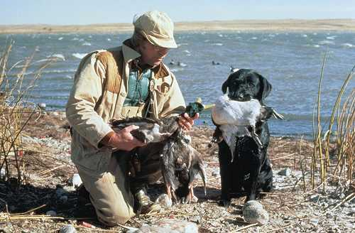 Missouri River Duck Hunting