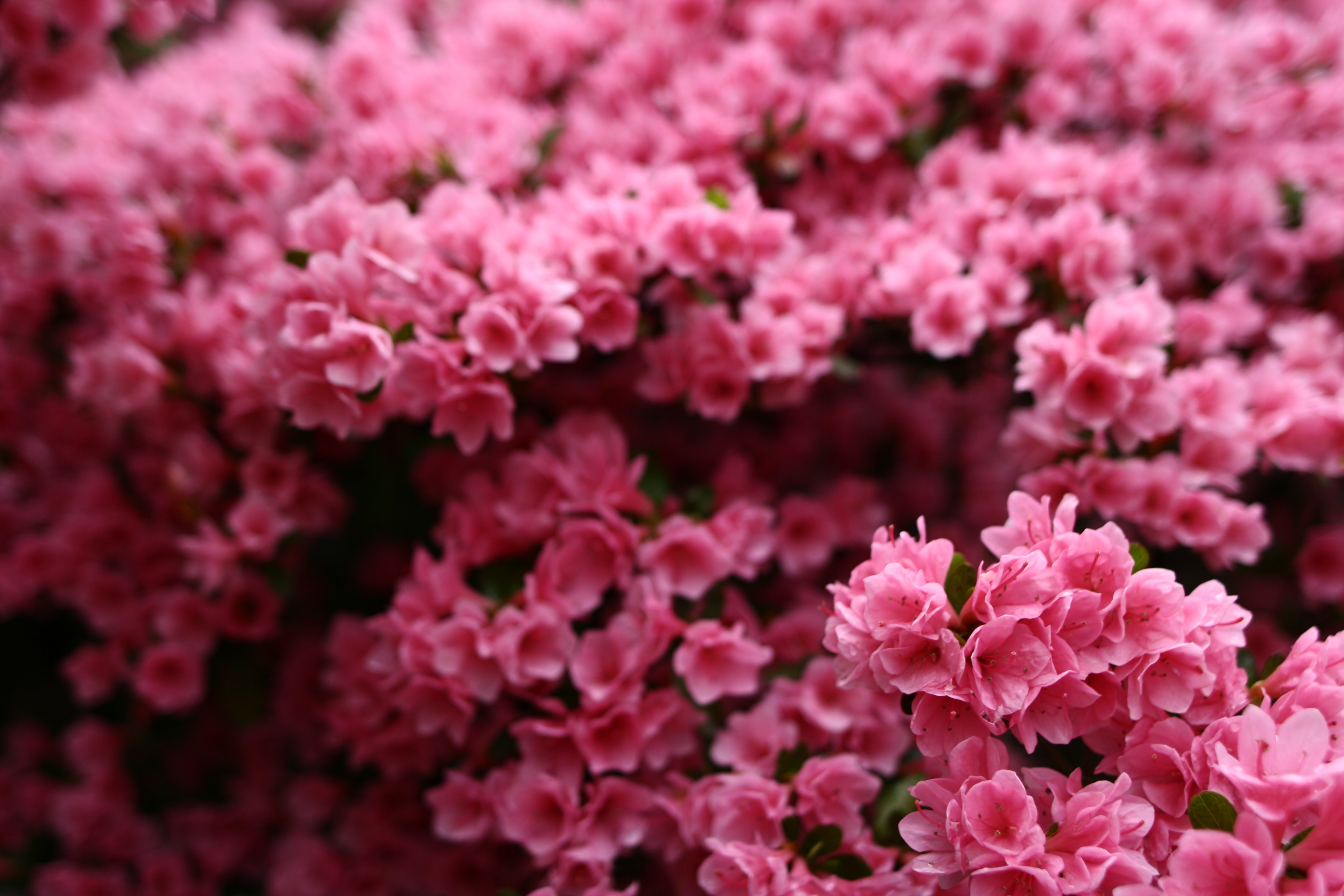 pink spring flowers - photo #36