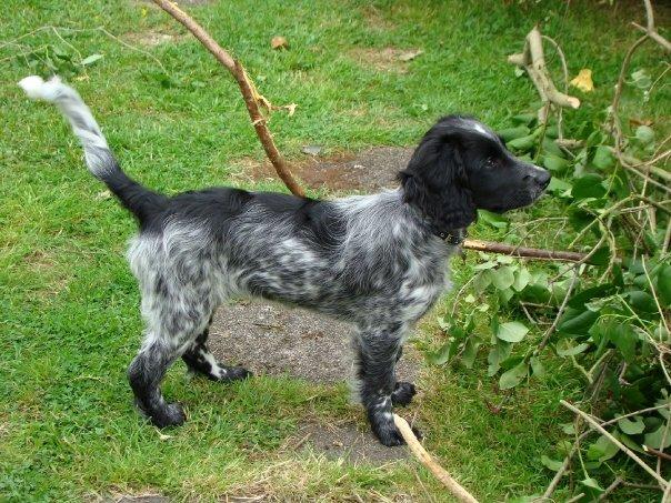 Dog Rescue Nottingham