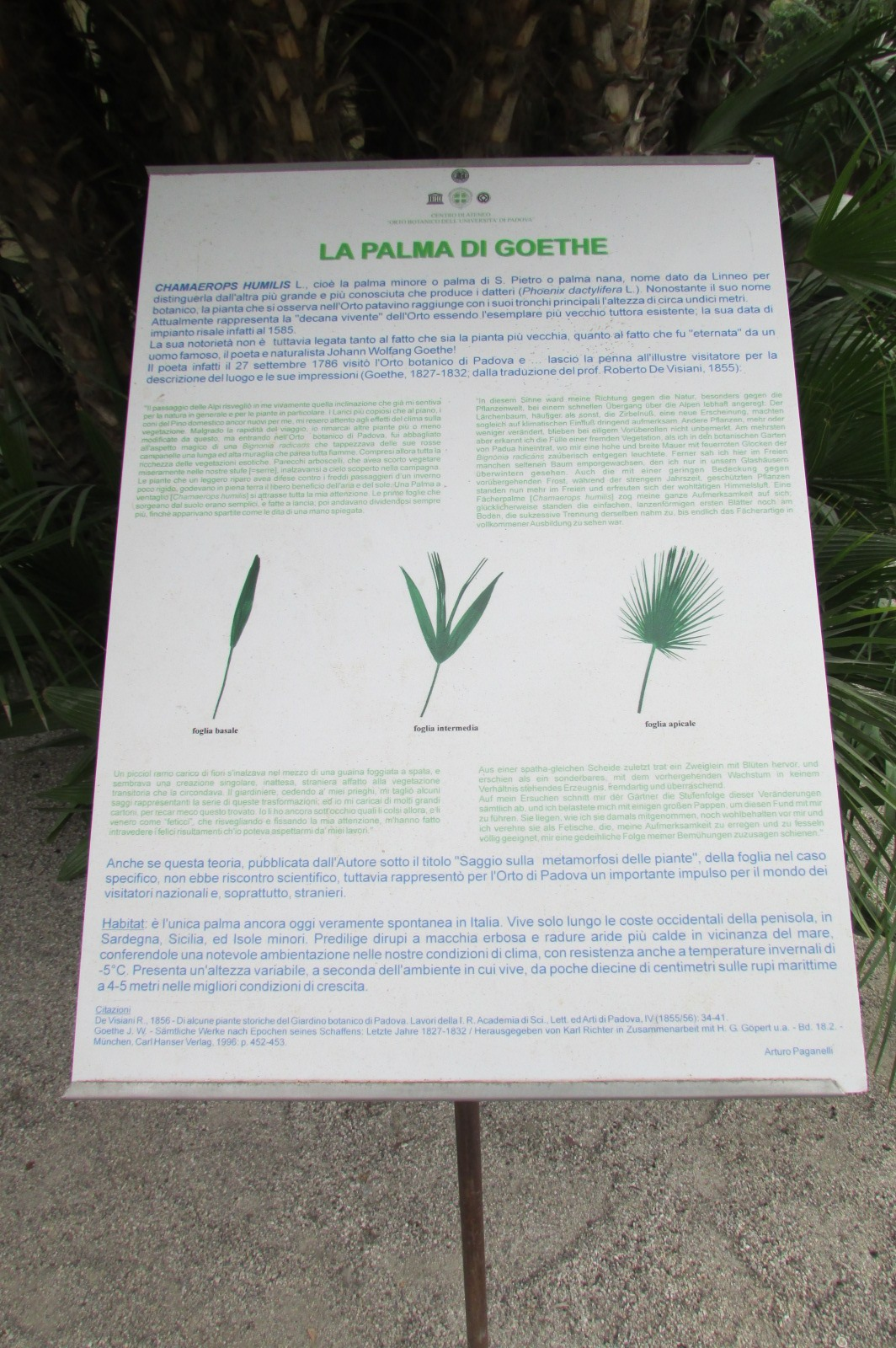 File:7 (VII) Palma Di Goethe 10-07 to 22 1427.jpg ...