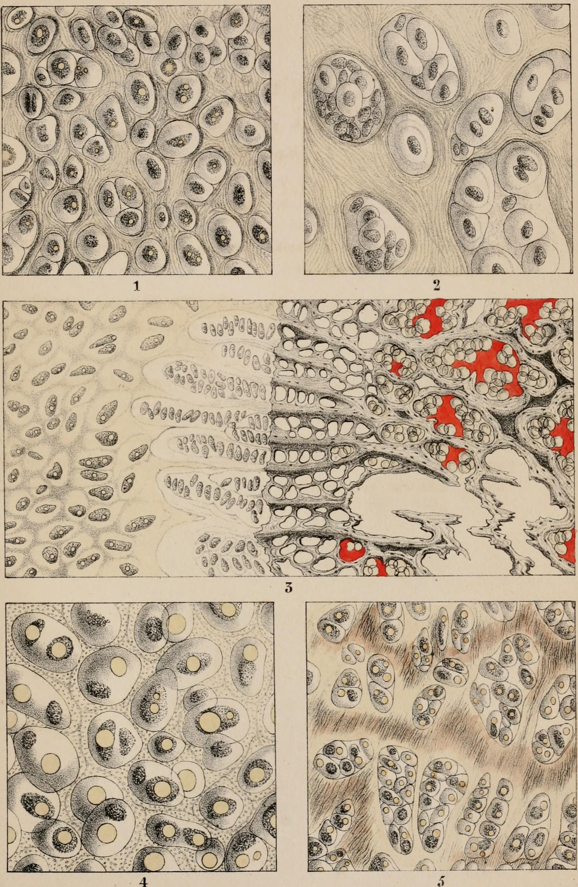 Niedlich Was Mikroskopische Anatomie Bilder - Anatomie Ideen ...