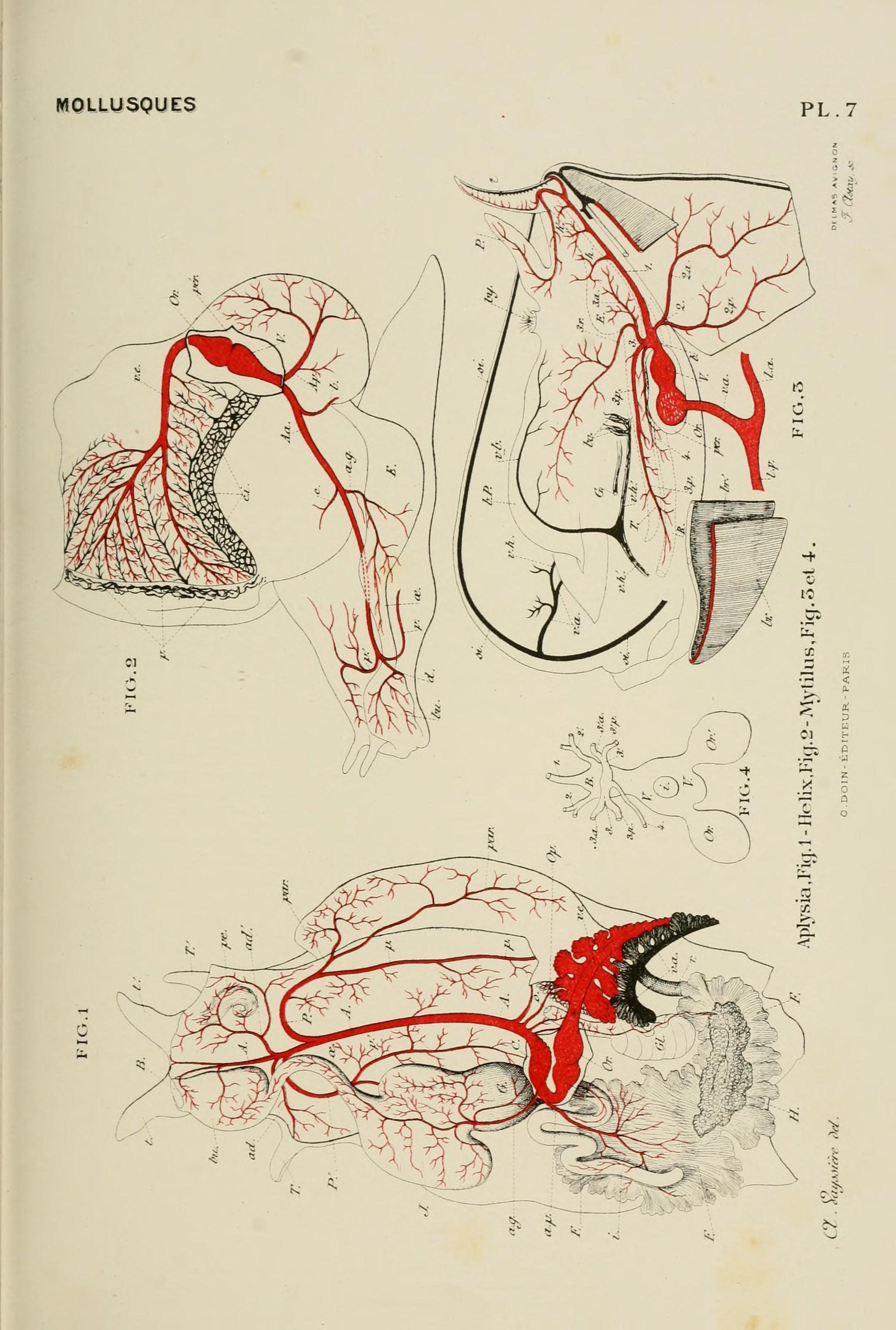 Tolle Studienblätter Für Anatomie Und Physiologie Zeitgenössisch ...