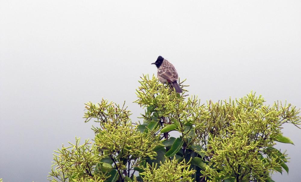 FileBird on tree canopy.jpg  sc 1 st  Wikimedia Commons & File:Bird on tree canopy.jpg - Wikimedia Commons