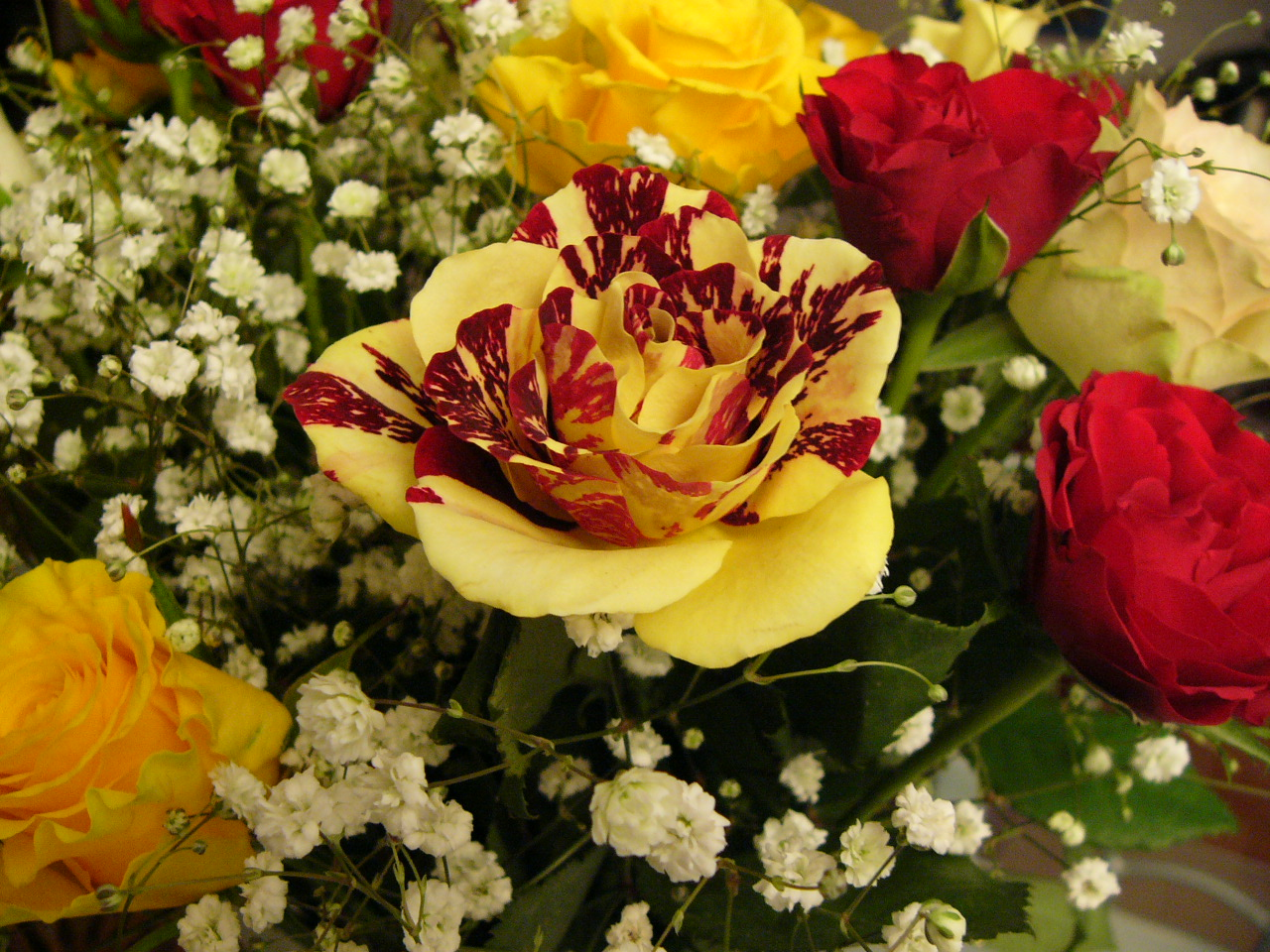 Gorgeous roses the meaning of rose colors 35 pics photo 25 by bayral izmirmasajfo