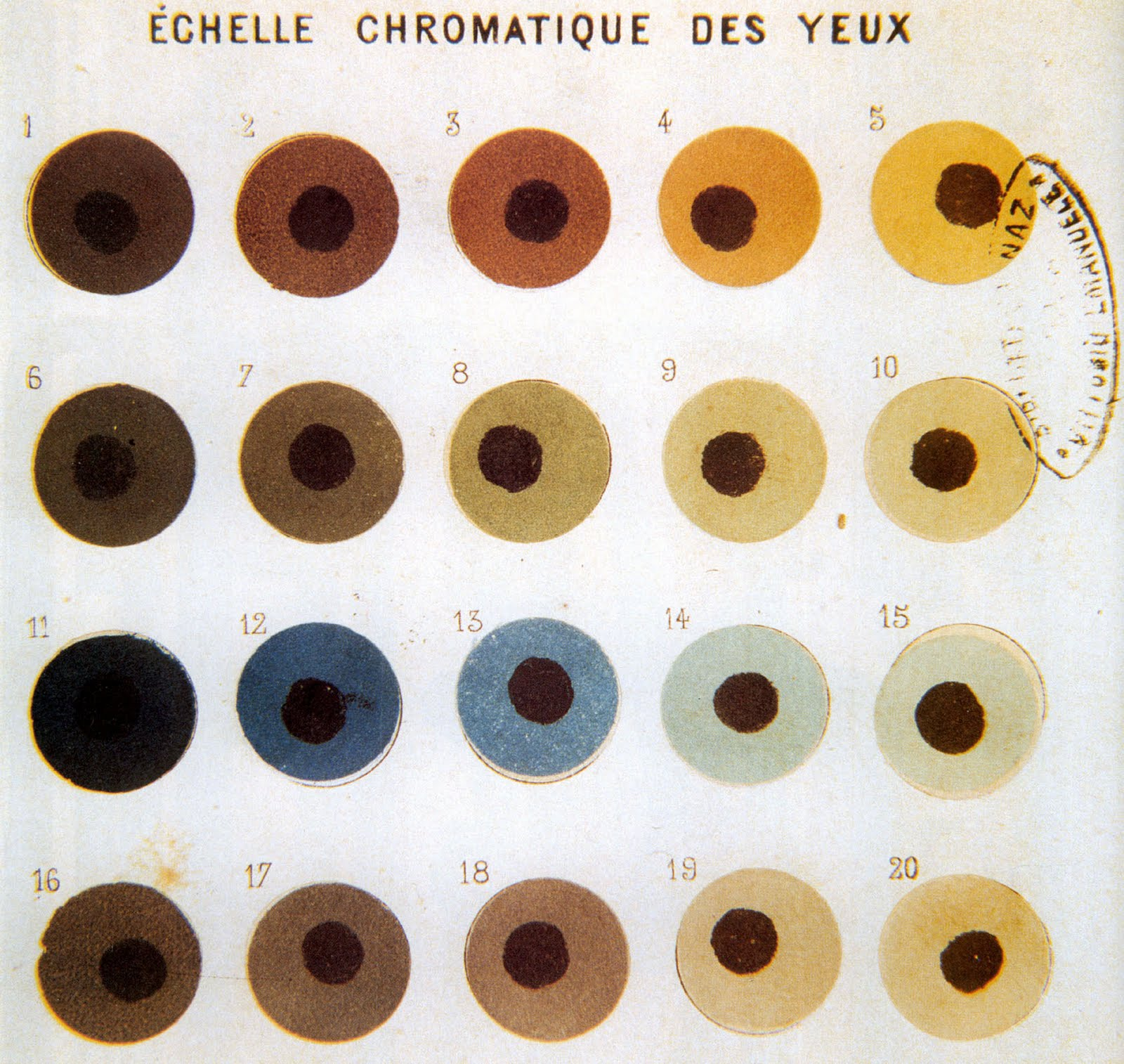 Filebroca Eye Color Chartg Wikimedia Commons