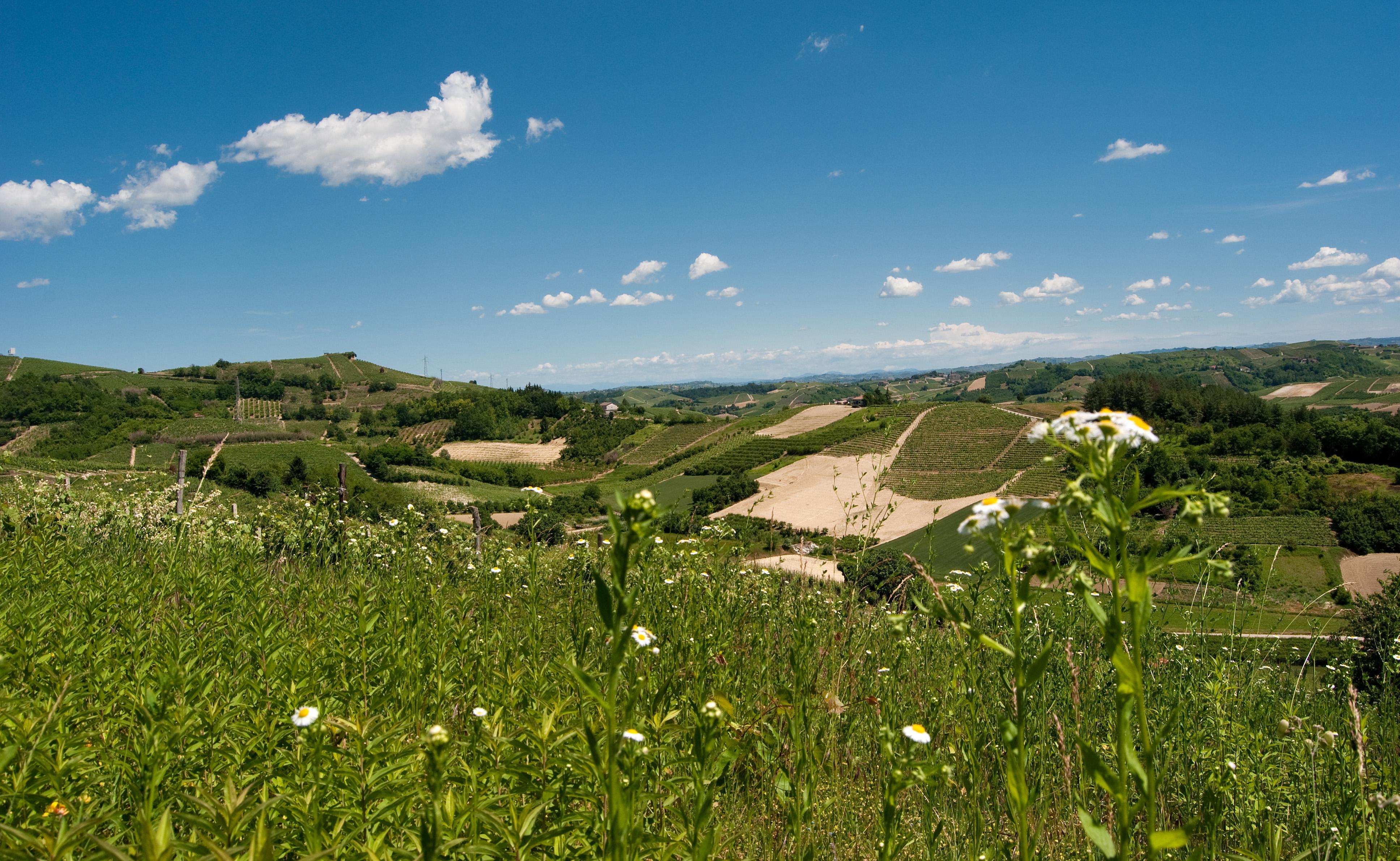 Fichier colline del roero piemonte italia jpg wikip dia - Mostre d arte in piemonte ...