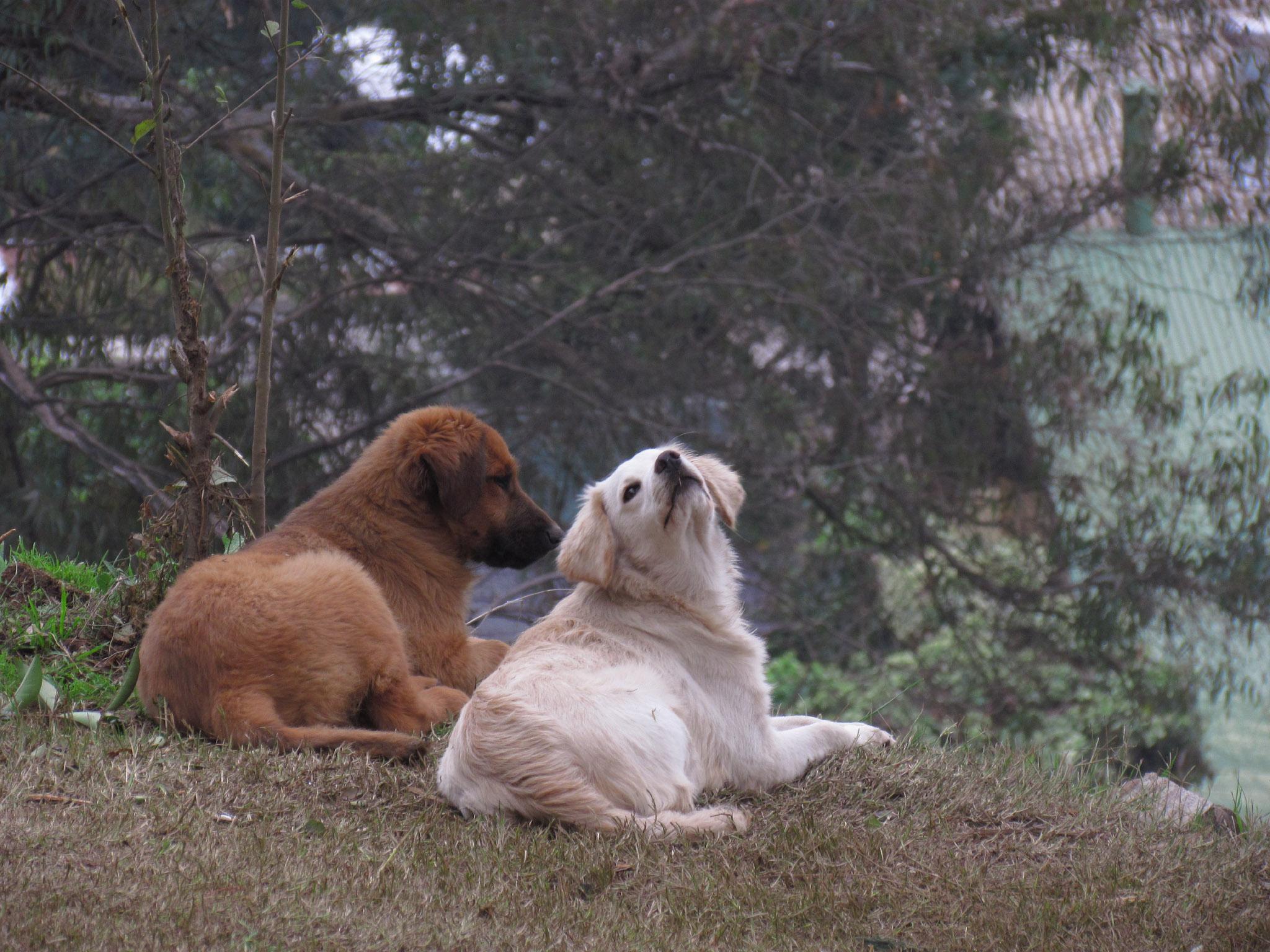 ¿Cómo socializar a tus perros con otros perros?