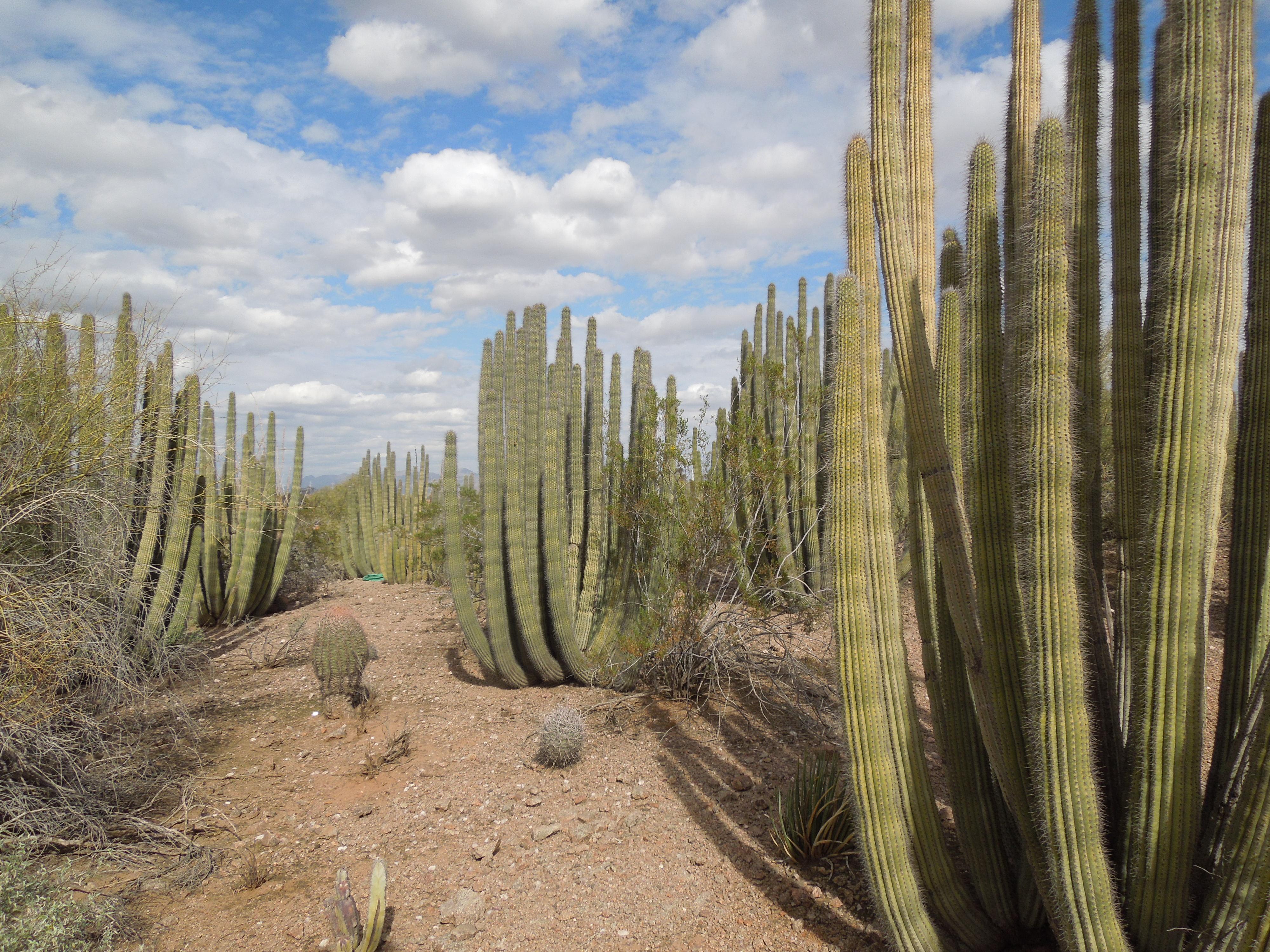 Beau File:Desert Botanical Garden Phoenix Arizona 36.JPG