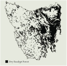 Tasmanian dry sclerophyll forests