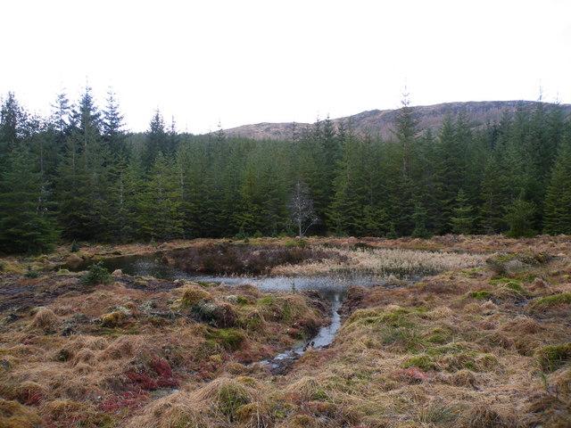 Drainage pond beside Ardochy Forest Track - geograph.org.uk - 1203107.jpg