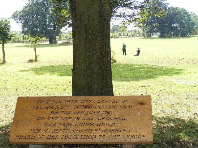 Elizabethan Tree near Hatfield House - geograph.org.uk - 566881
