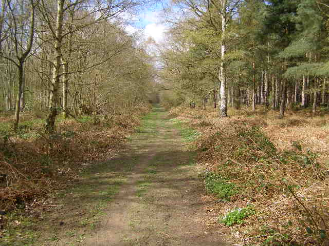 Footpath in Bourne Wood - geograph.org.uk - 760609