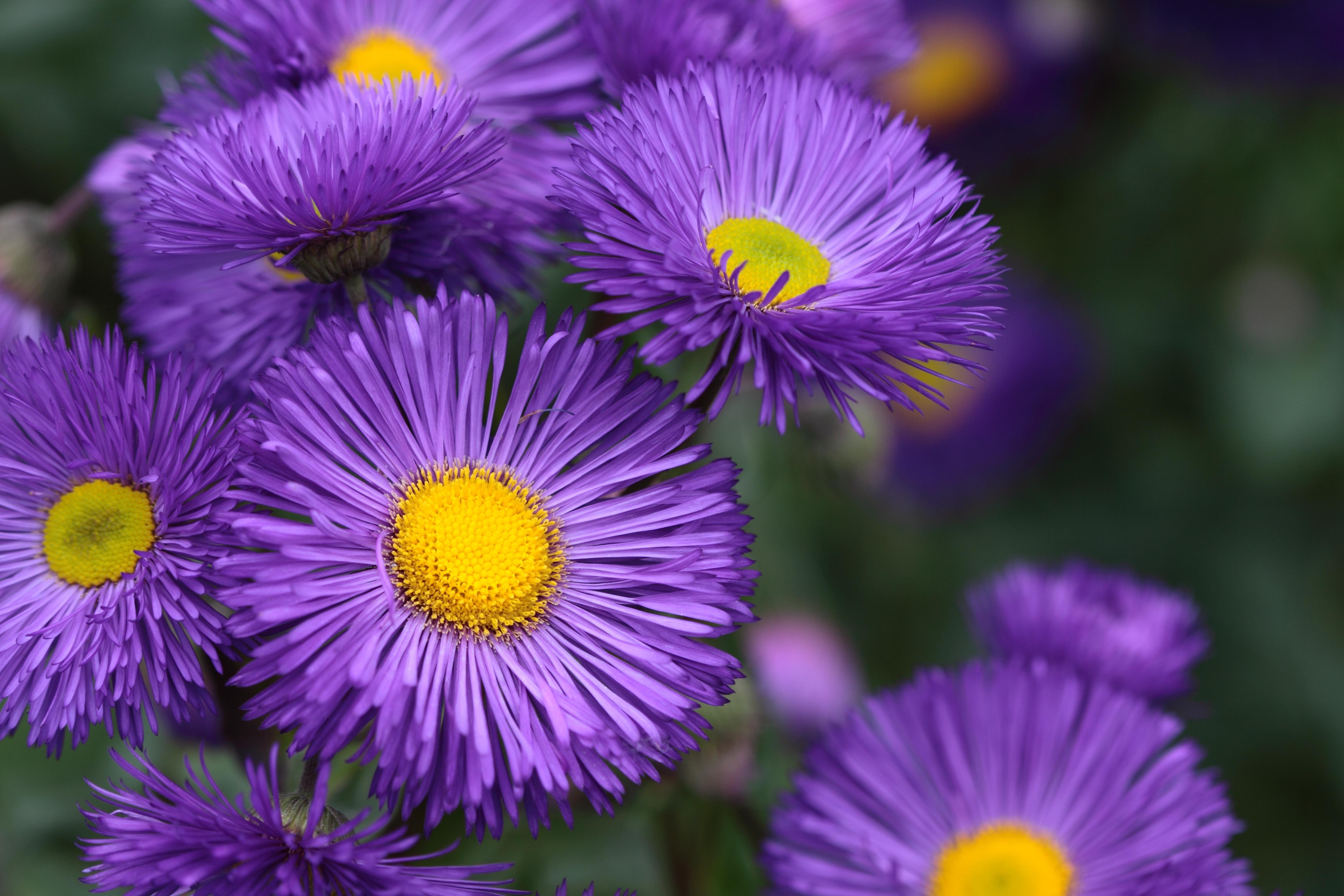 file gorgeous flowers 3625280364 jpg wikimedia commons
