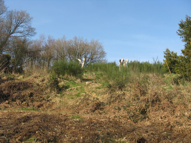 Gorse, trees stumps and trees - geograph.org.uk - 1210499