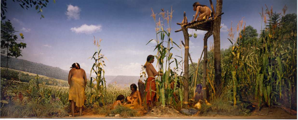 An artist's depiction of an Iroquois family tending to their beans, corn, and squash. The Three Sisters and Four Sisters polyculture companion plant system was adopted by Native American agricultural societies throughout the Americas.