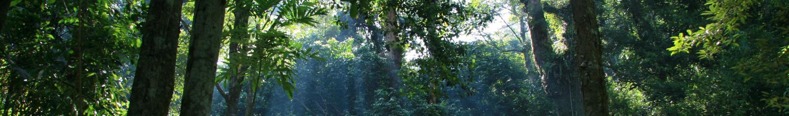 Gunung Palung National Park banner.jpg