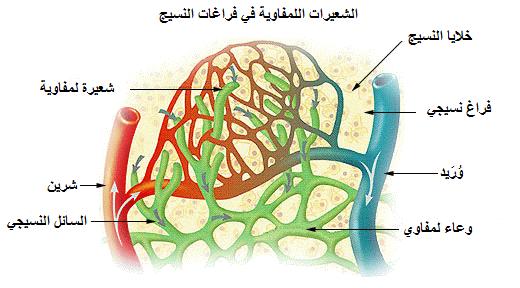نتيجة بحث الصور عن لماذا يسير اللمف باتجاه القلب