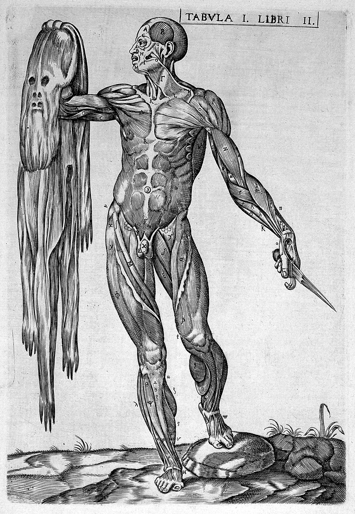 Ziemlich Die Anatomie Des Pferdes George Stubbs Zeitgenössisch ...