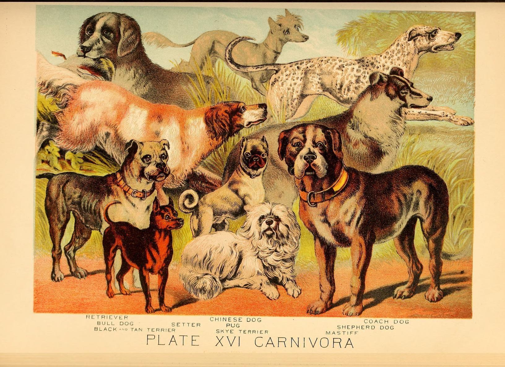 List Of Dog Breeds Wikipedia