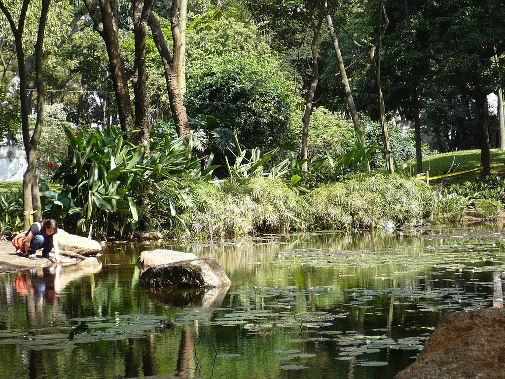 File lago jard n bot nico de medell wikimedia commons for Lagos de jardin