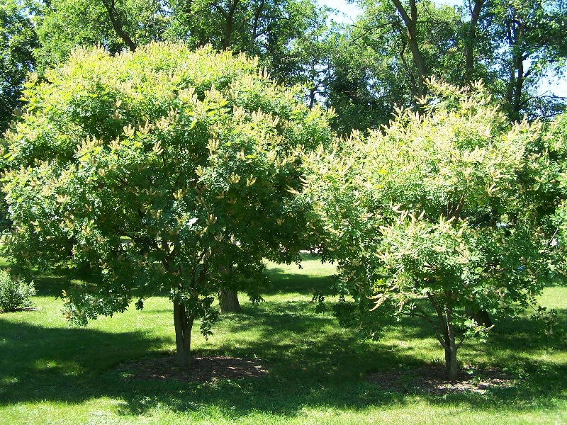 Фото деревья с белыми цветами
