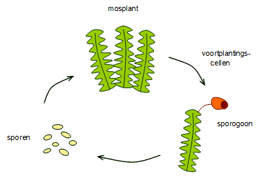 Moss cycle.png