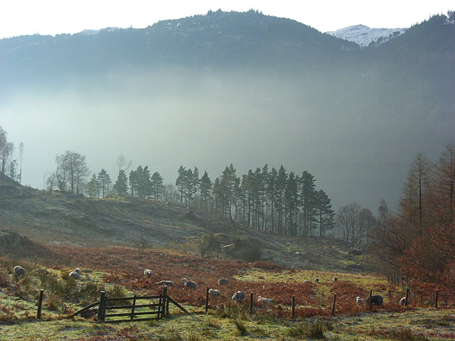 Pasture above Thirlmere - geograph.org.uk - 1073211