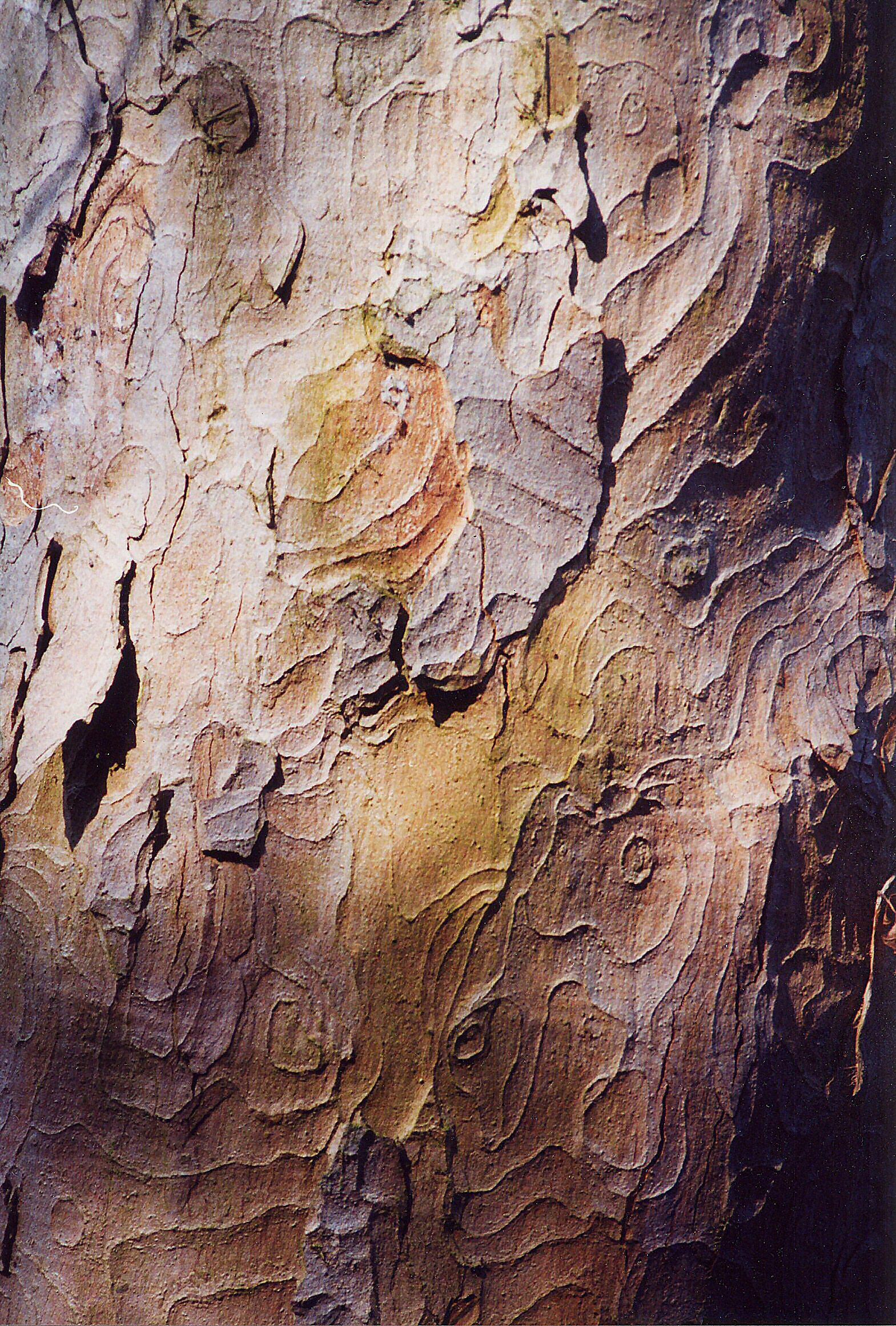 Natural Contours Tree Care