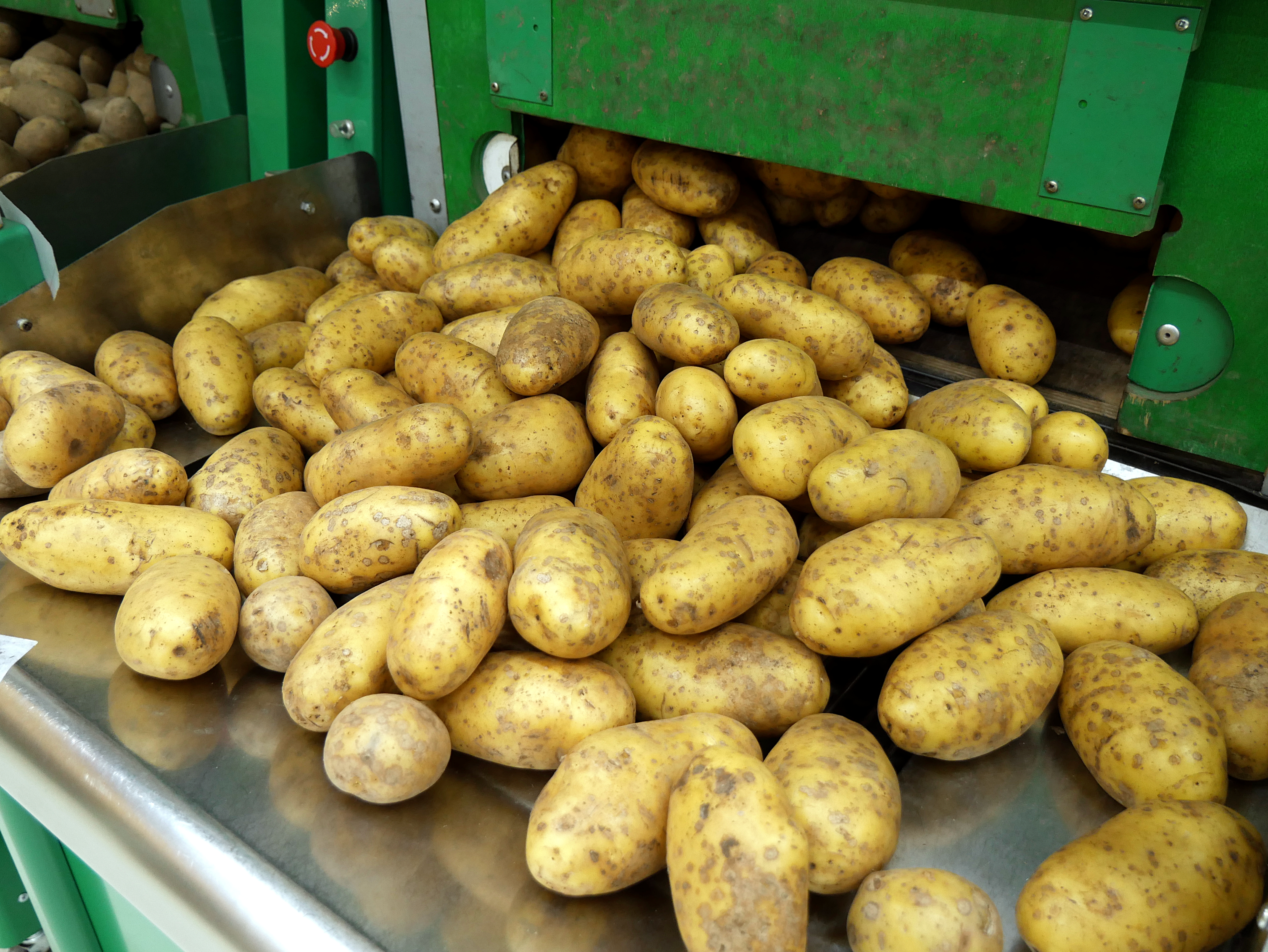 File:Potatoes in grocery store jpg - Wikimedia Commons