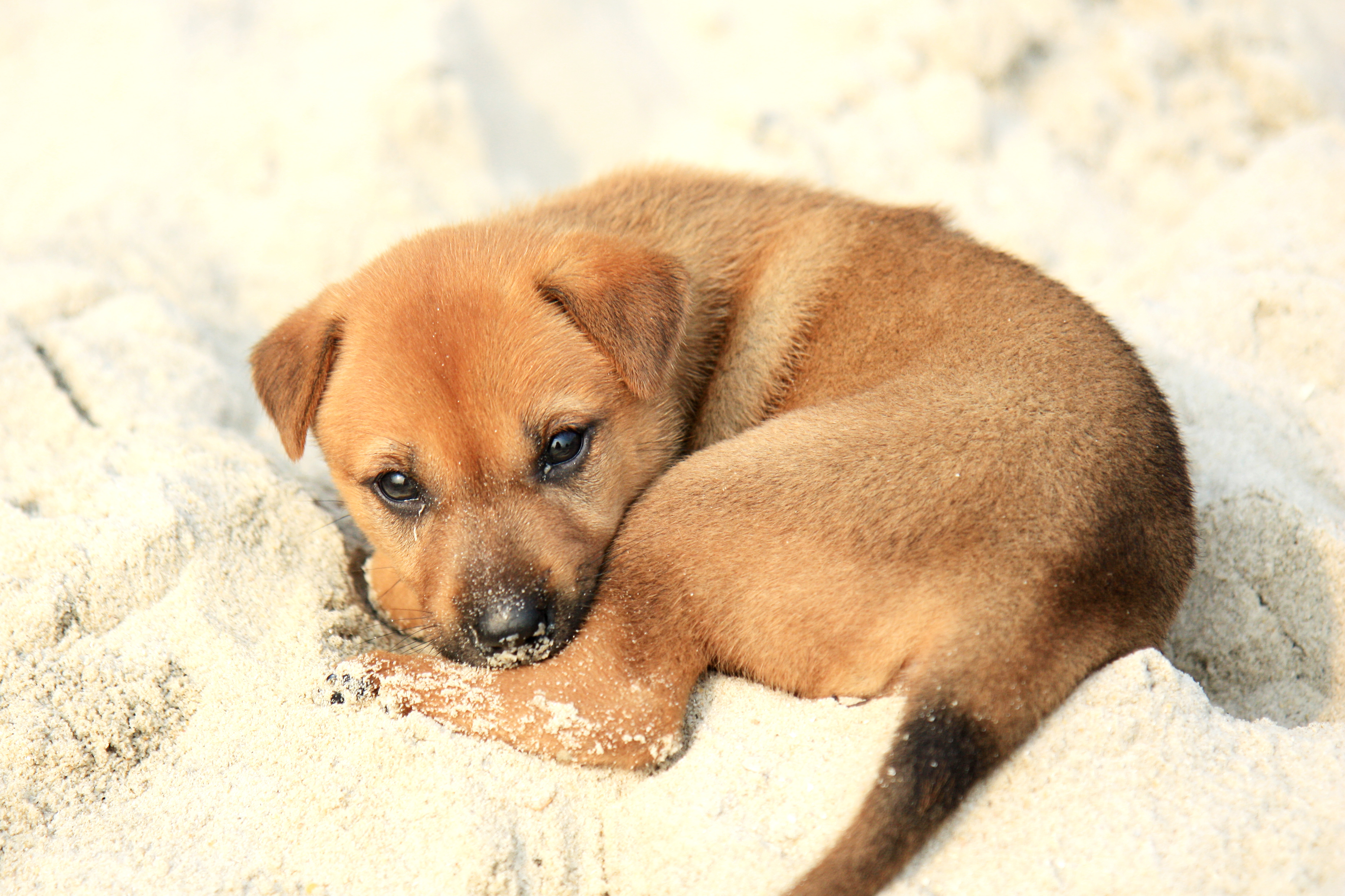 File:Puppy on Halong Bay.jpg