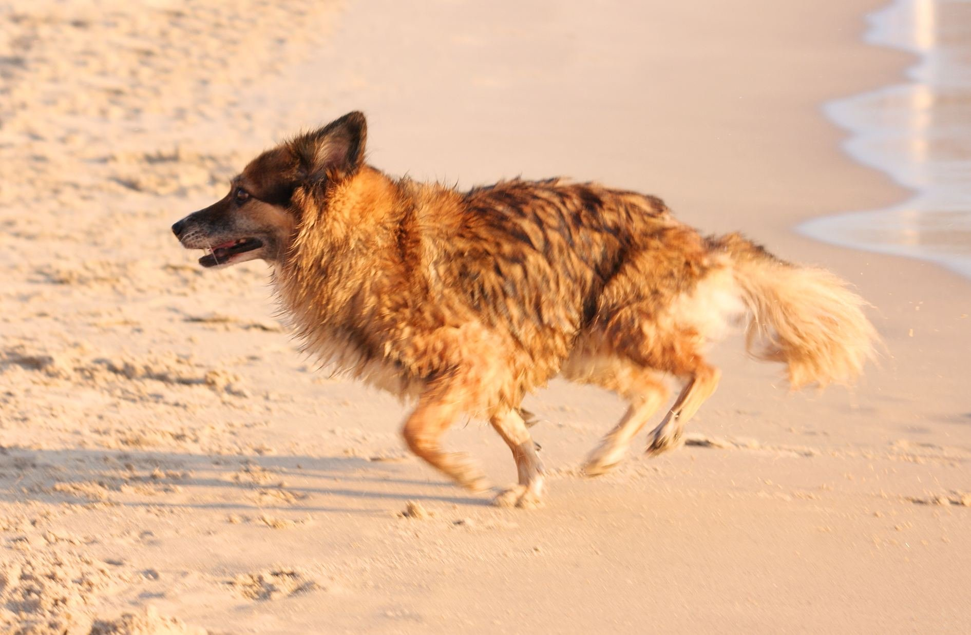 Dog S Bay Laketown Township Michigan