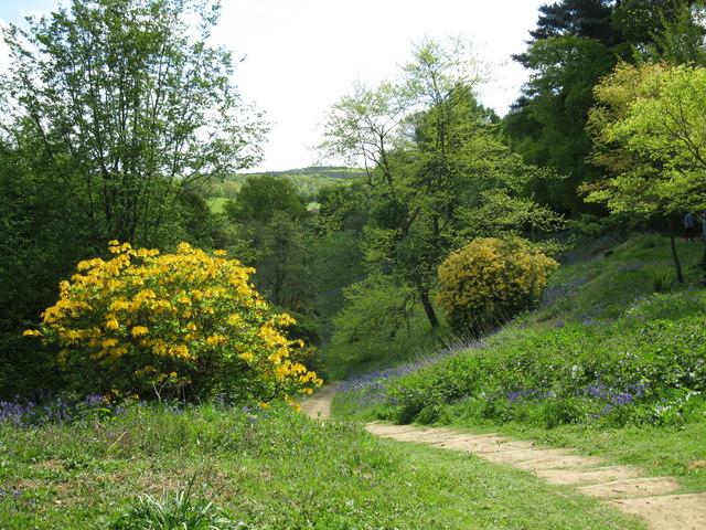 Steps to The Bowl, Winkworth Arboretum - geograph.org.uk - 1285790