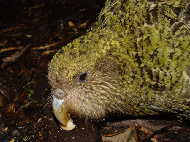Scientists Name Top 100 Unusual And Endangered Birds