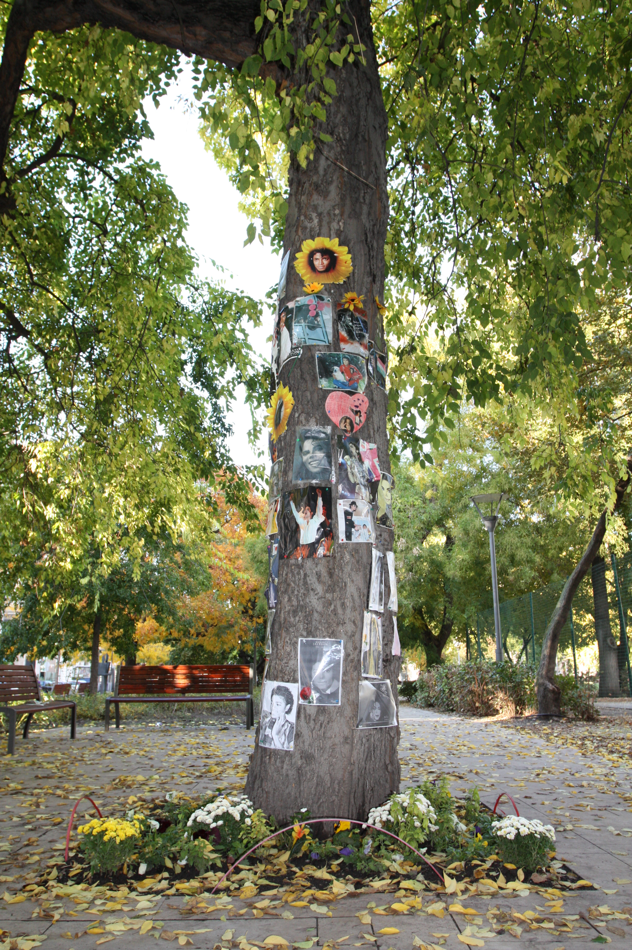 file the michael jackson memorial tree in budapeszt jpg wikimedia