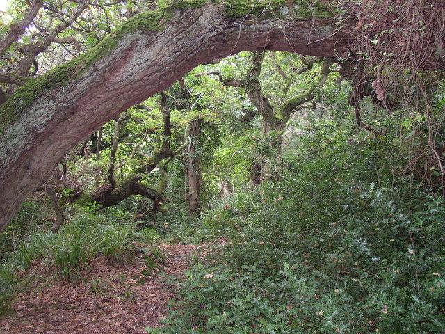 Tree arch, Hayburn Wyke, Cloughton - geograph.org.uk - 245026