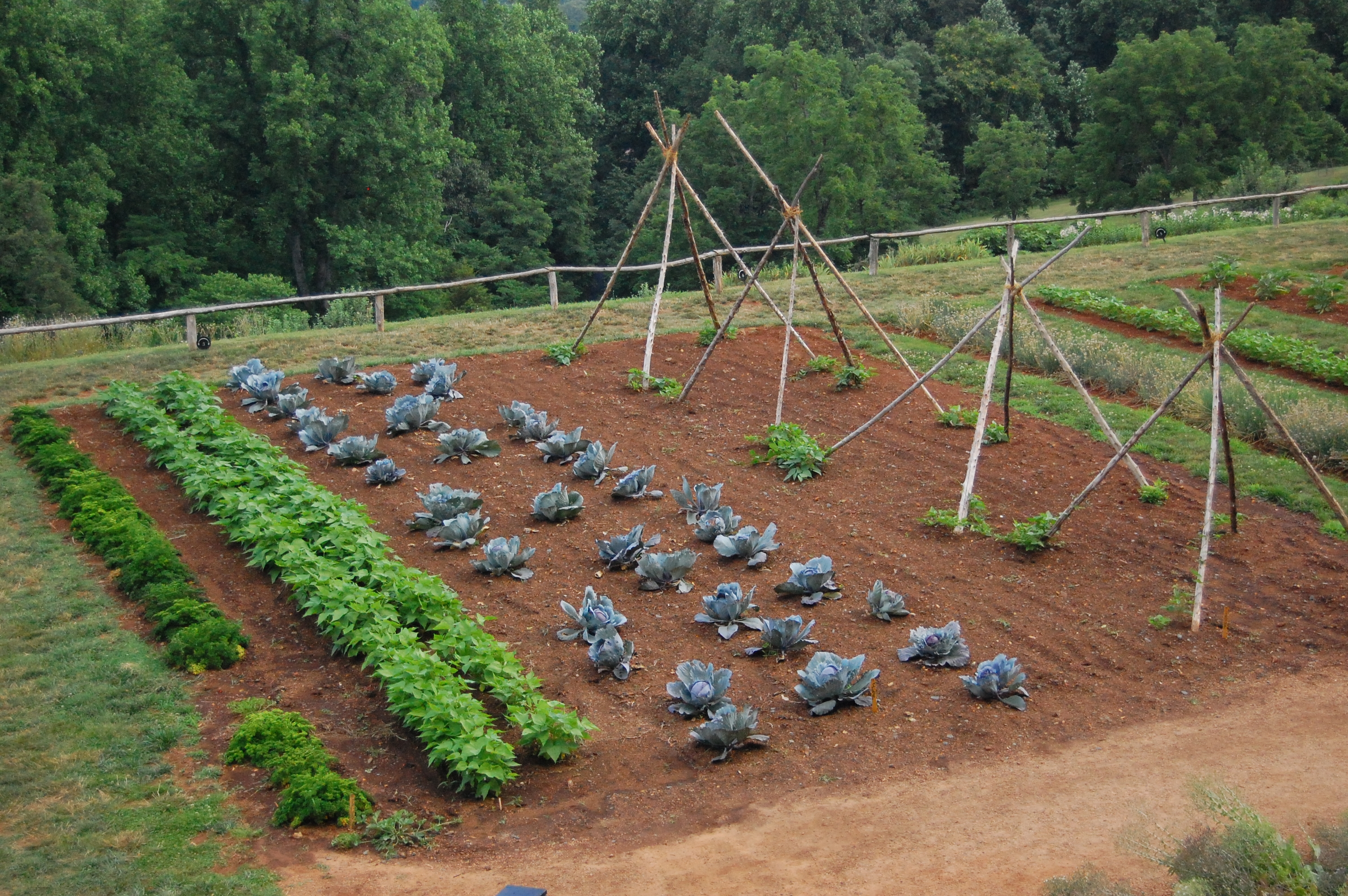 Watch: Starting A Vegetable Garden