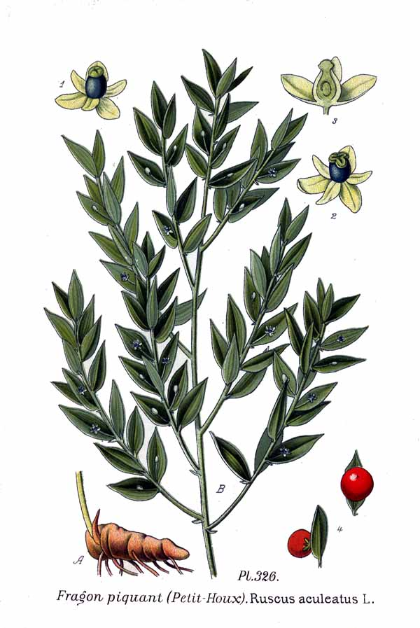Gilbardeira