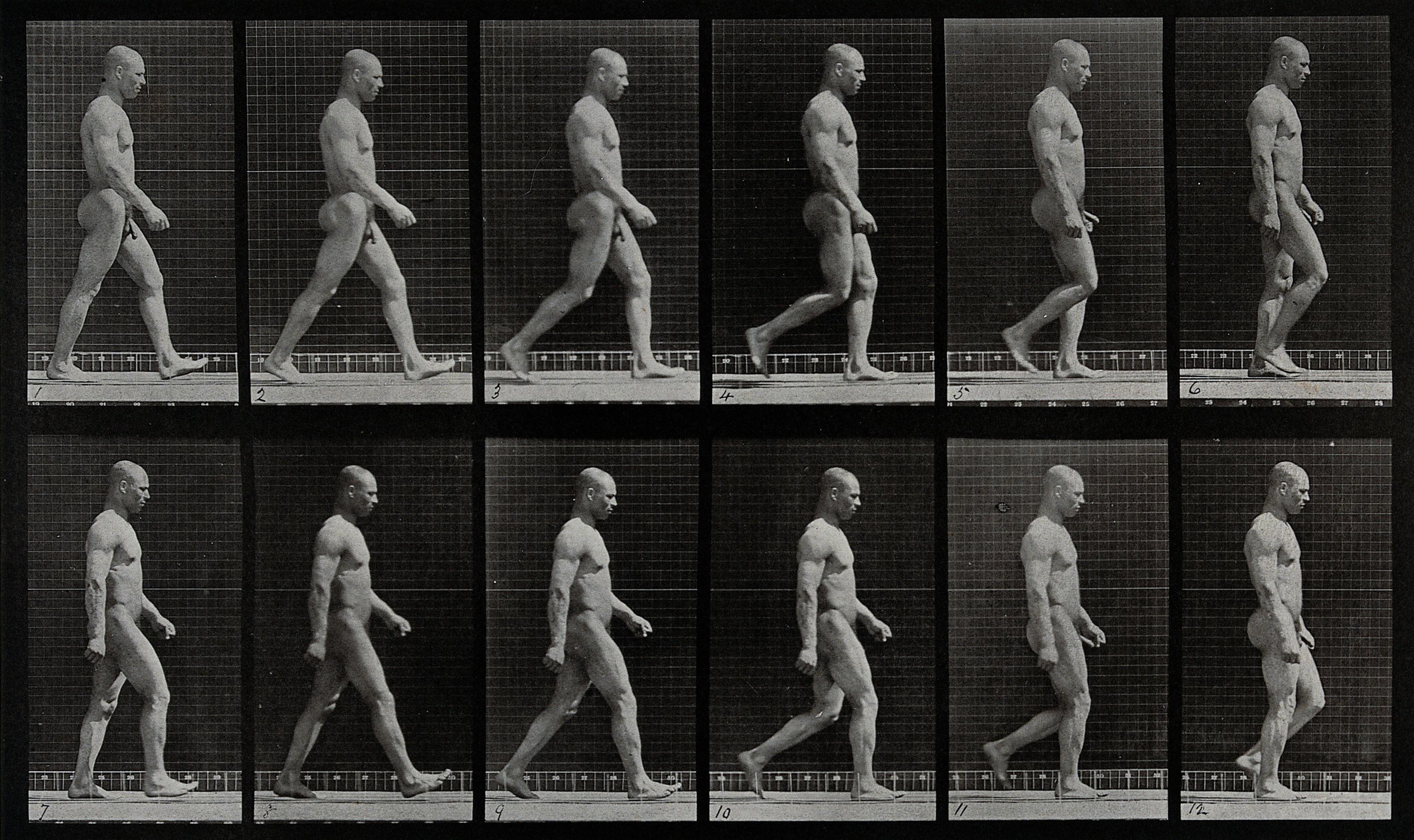 Muybridge human walk study