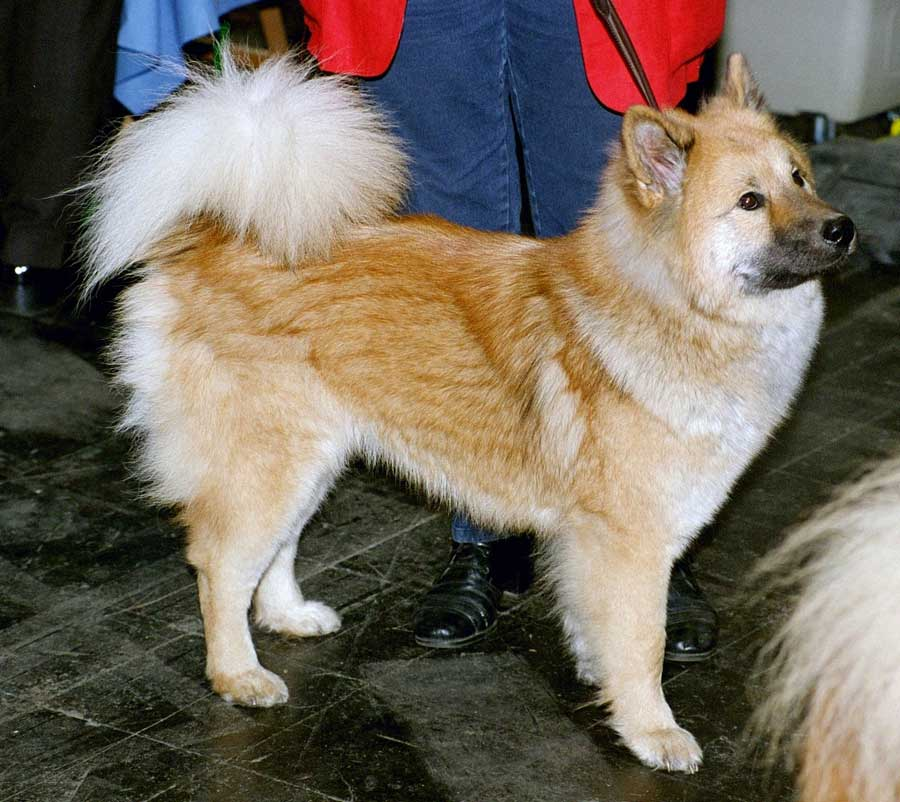 Type Of Dogs Name And Picture