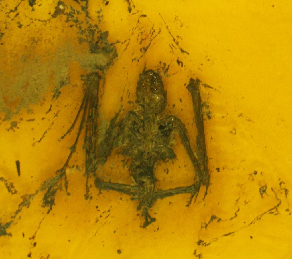 http://upload.wikimedia.org/wikipedia/commons/c/c8/Archaeonycteris_trigonodon_4.jpg