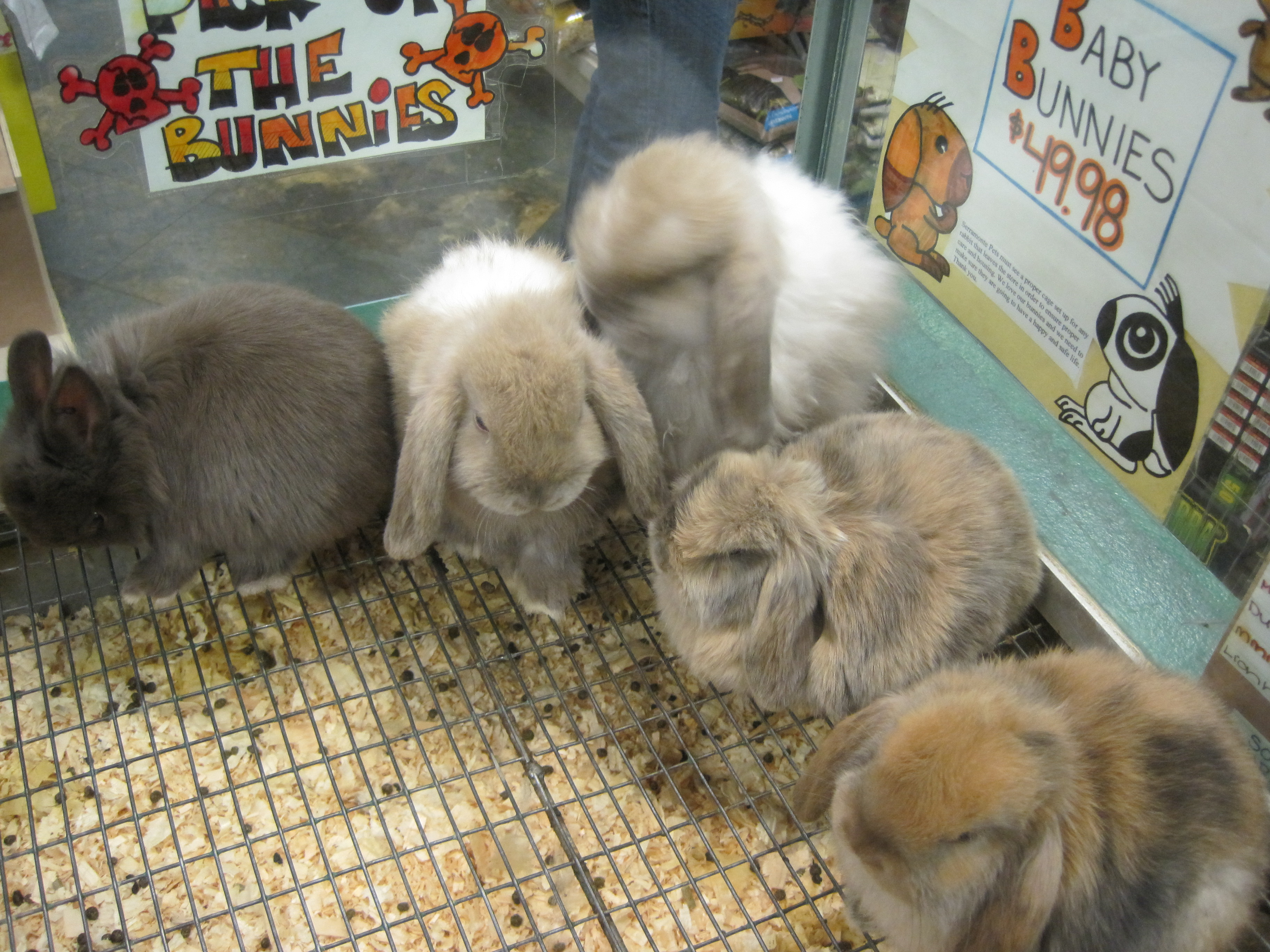 5 reasons to neuter or spay your rabbits coops and cages. Black Bedroom Furniture Sets. Home Design Ideas