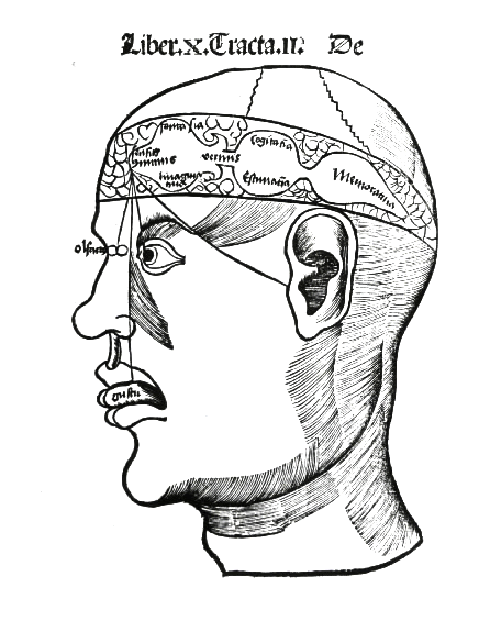 De potentiis anime sensitive, Gregor Reisch (1504) Margarita philosophica. Medieval science postulated a ventricle of the brain as the location for our common sense, where the forms from our sensory systems commingled. Brain, G Reisch.png